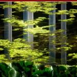 Instantáneas del jardin Botanico – Julio